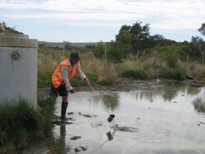 Sampling at a constructed wetland site